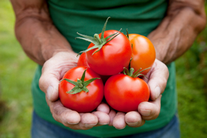 How a Garden-Fresh Tomato Can Be Therapeutic
