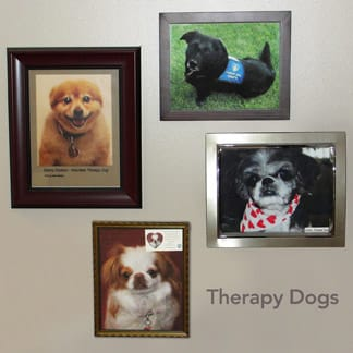 Therapy Dogs Pictures